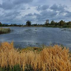 У природы нет плохой погоды - потемнели небеса - отразили воды....