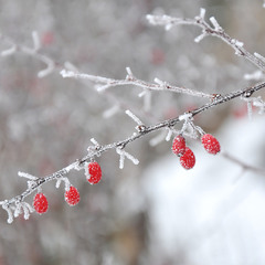 Примороженный минимализм...