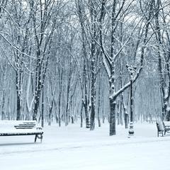 Снег... любитель контраста...