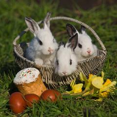 С Светлым Праздником Пасхи!  Радости, мира, любви и здоровья всем!