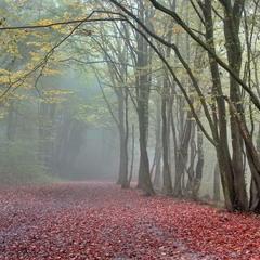 В лесу уже темно и мглисто...