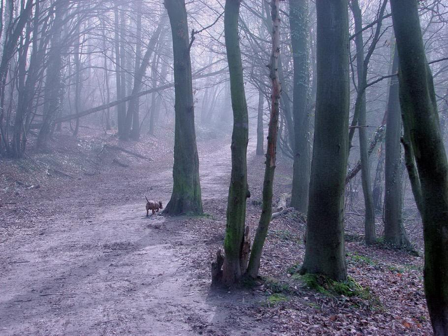 оформление лес после бури фото своей болезни