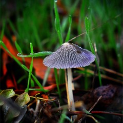весенний зонтик