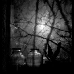 Ночные тени