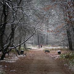 Первый снег, первый след