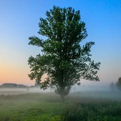 Одинокое дерево.
