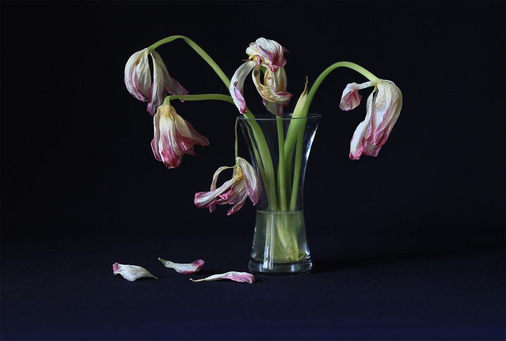 тюльпаны увядшие фото могут быть такими