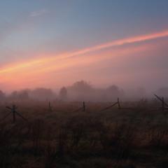 Прохладное утро укрылось росою.