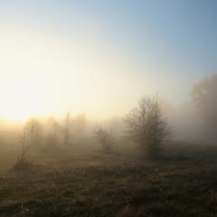 Пробилось солнце сквозь туман.