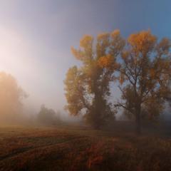 Утро купалось в осеннем тумане.