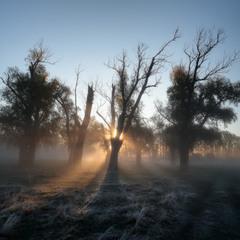 Вчера туман, сегодня вдруг морозы.