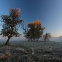 День начинается туманом.