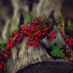 Осенние дары 2