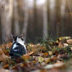 Осенние зарисовки.