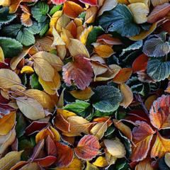 Осенняя карамель.
