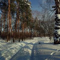 По зимним тропинкам.