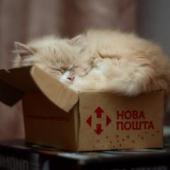Тра-та-та, тра-та-та, нам доставили кота.