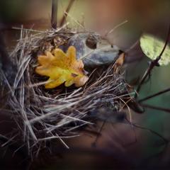 Вновь птичьи гнезда опустели.