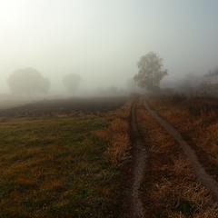 Белый туман окутавший хутор.