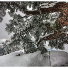 Дело было в январе, Стояла ёлка на горе.