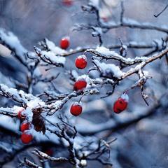 зимняя мозаика