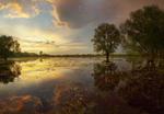 Мокрый луг