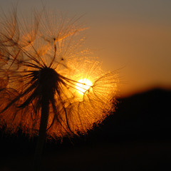 В лучах заходящего солнца...