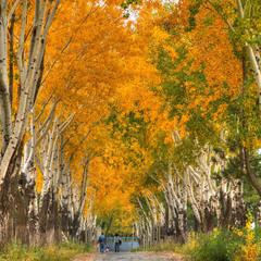 Сердце из листьев, Золотая осень