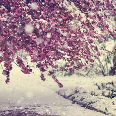 шел пятый месяц зимы...