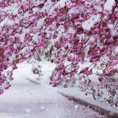 а снег не знал и падал... ©