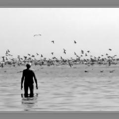 Лето, море, чайки.