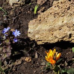Каменный монстр нюхающий цветы.