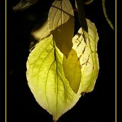 Осенние фонарики.