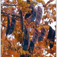 Осени платочек золотой.