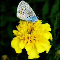 Голубое на желтом.