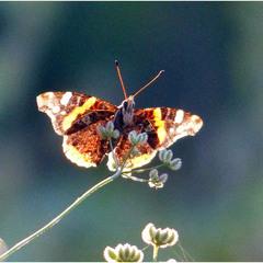 Метелик на палочці.