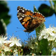 И ещё раз о бабочках...Вечное вдохновение.