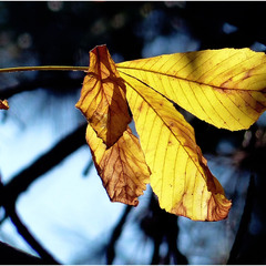 Осенний натюрморт.