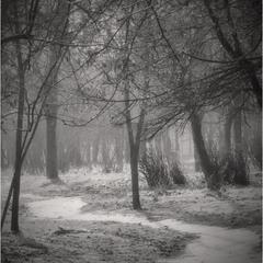 В моём парке туман.