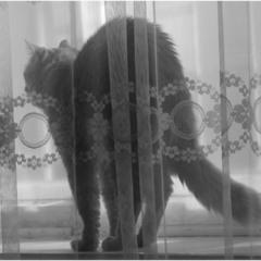 Кто там ходит за окном такой страшный?