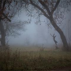 Дирижер туманного леса.