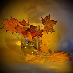 Таких фарб немає літом і зимою, недаремно осінь зветься золотою...