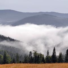 Тут ночують тумани