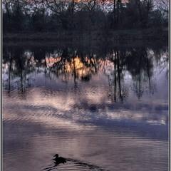 Вечереет. И на озеро садятся утки...