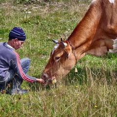 Хлопчик Вова і корова