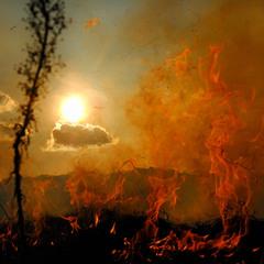 Поджаренное солнце