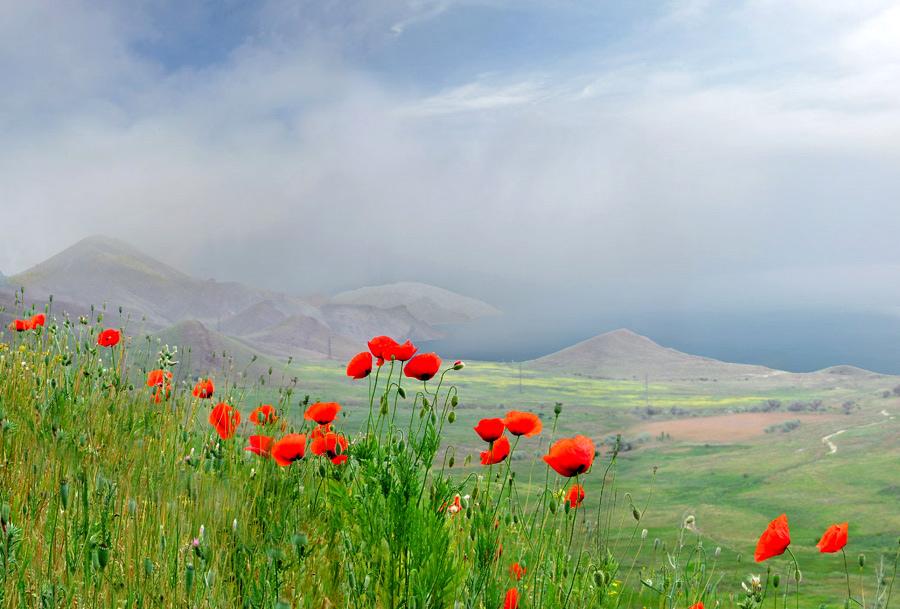 заморозка полевые цветы таджикистана фото результате, мир увидел