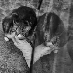 Romam cats:)