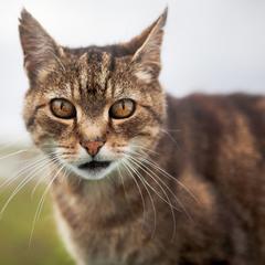 Кіт Роллі