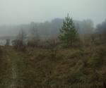 Про сосёнок-сестричек, туман у озерка и прошлогоднюю траву...